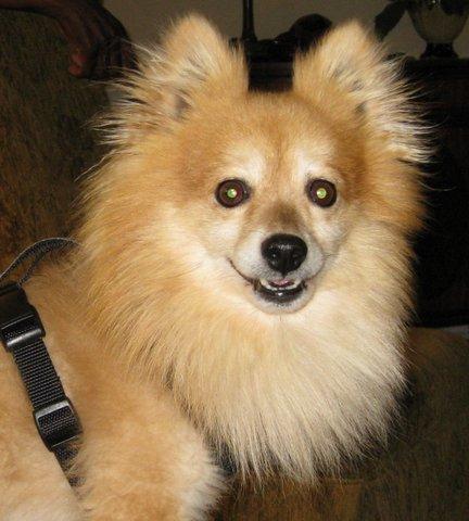 Ms. Schwartz's dog Ricky.