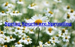 Spring Sports are Sprouting