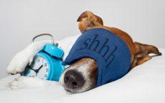 Sleep is an Approachable Dream Zzz