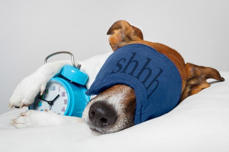 Sleep+is+an+Approachable+Dream+Zzz